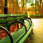 A park bench in Central Park, representing things people miss after moving out of NYC