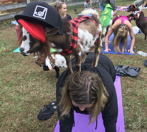 Goat Yoga Nashville I Baby Goats