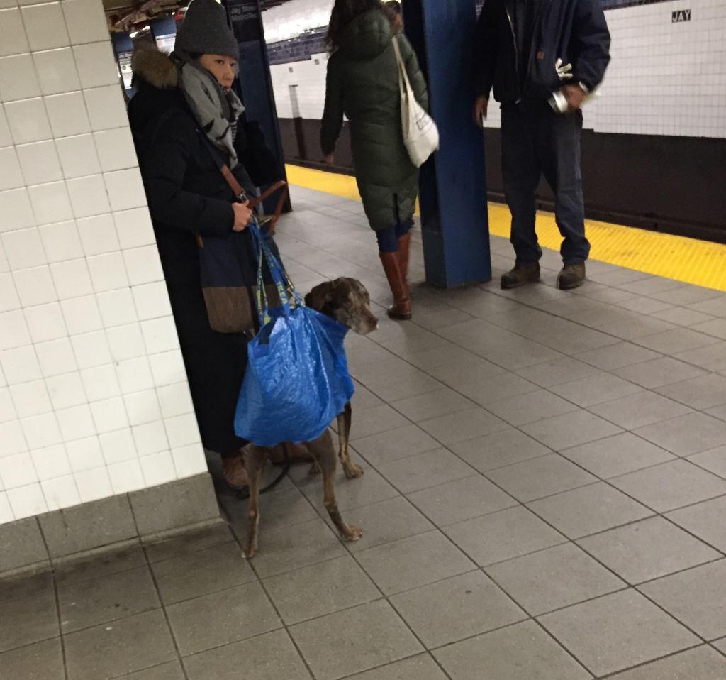 big-dog-in-bag
