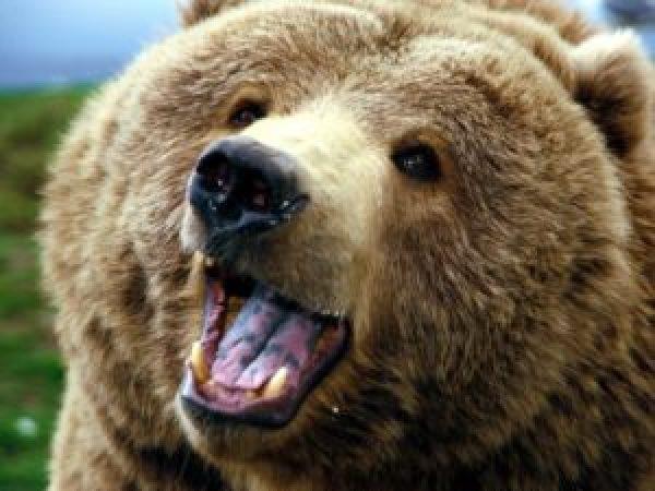 cute-bear