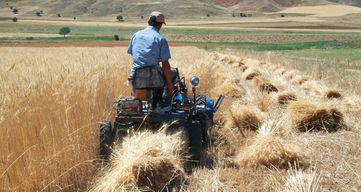 Türkiye Yurt Dışında Tarım Arazisi Kiralayacak