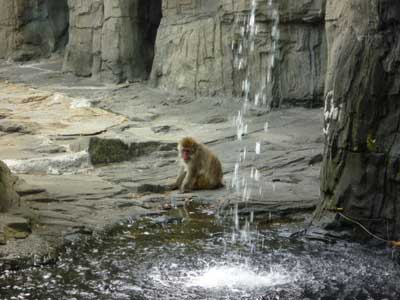 monkeys-central-park-zoo