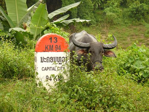 laos-captial-city-94km-photo-by-petebrook.jpg