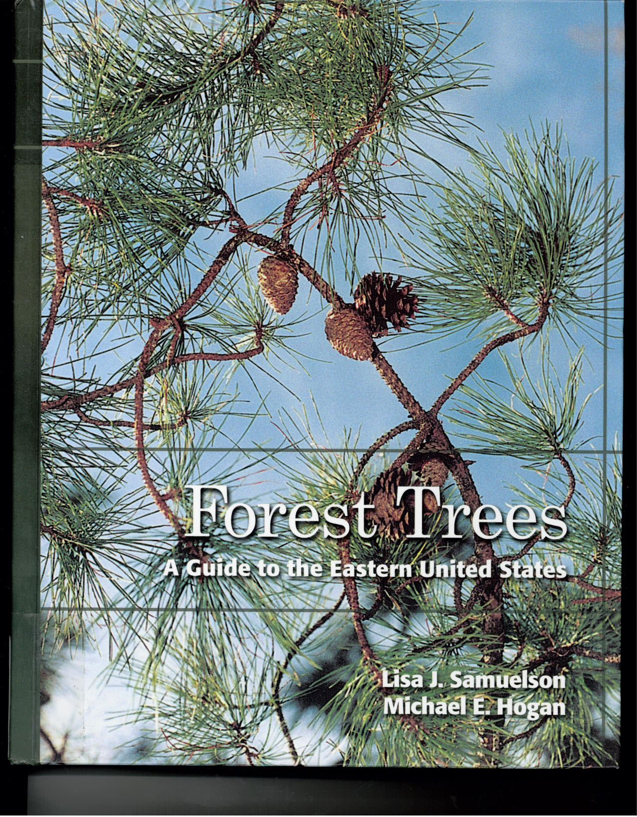 Forest Trees cover