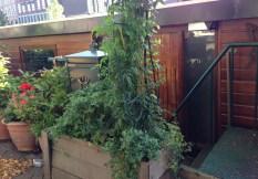 houseboat front garden