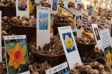 tulip bulbs amsterdam
