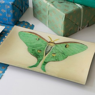 eyed-green-butterfly-tray-main