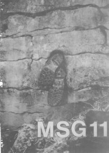 MSG11