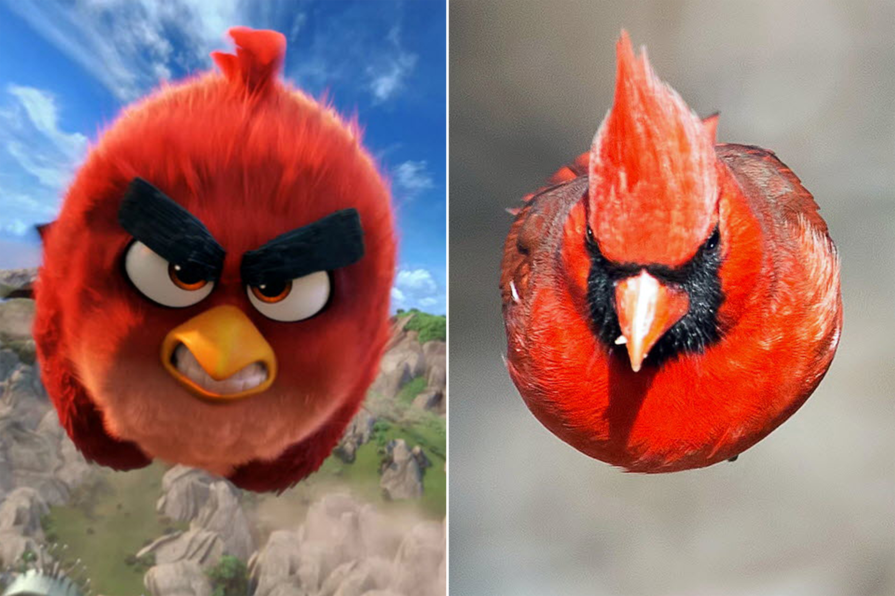 Real Life Angry Bird Is At Large