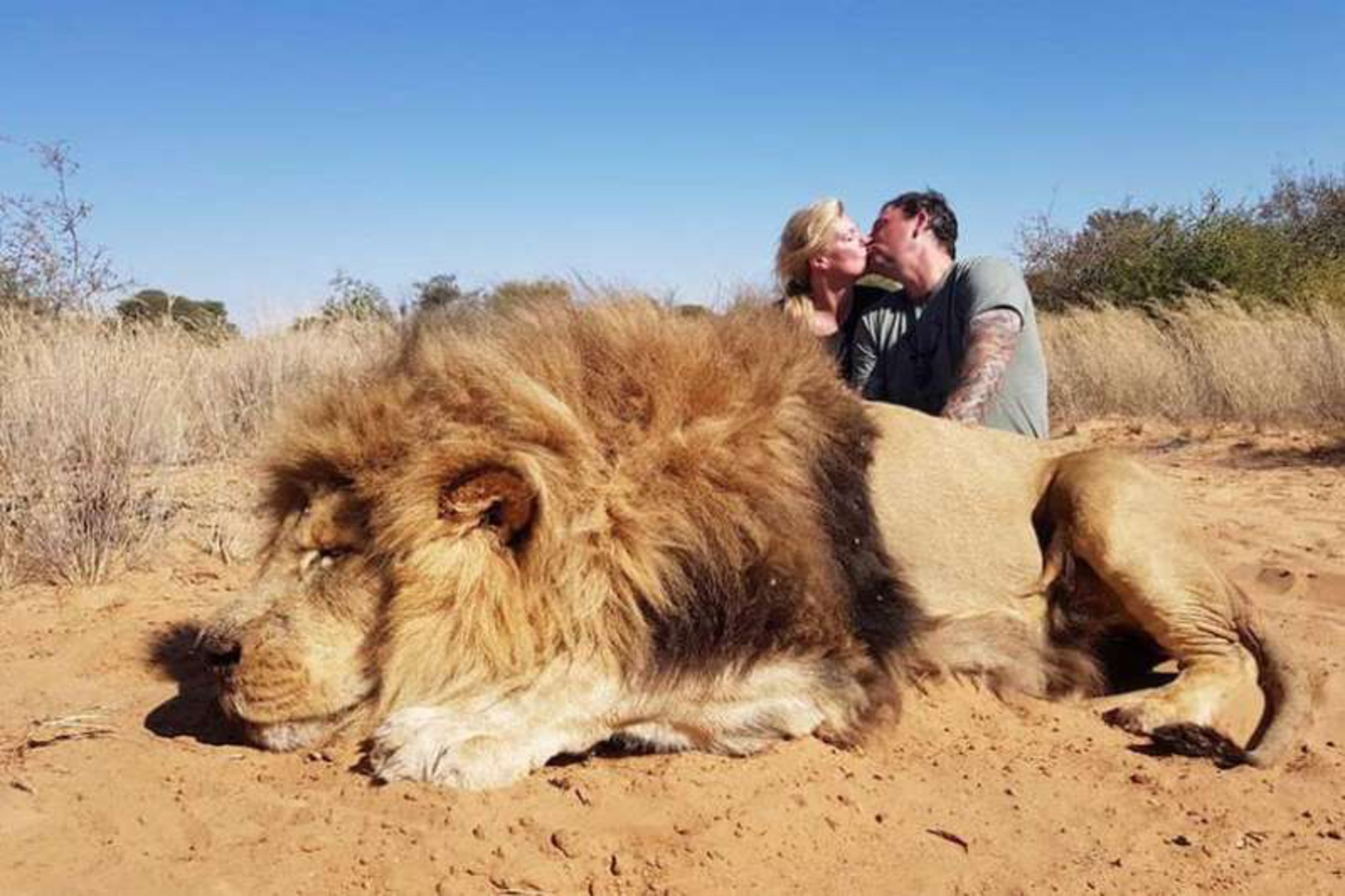 Canadian couple shamed for taking kiss photo over dead lion