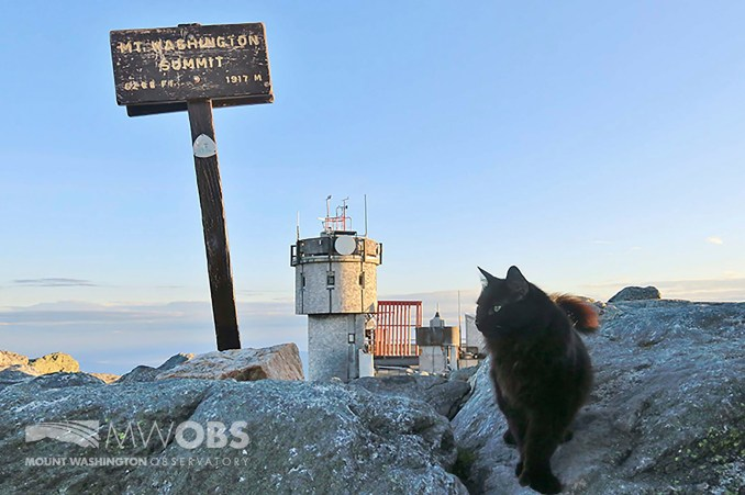 Beloved cat who comforted weather observers at Mt Washington dies