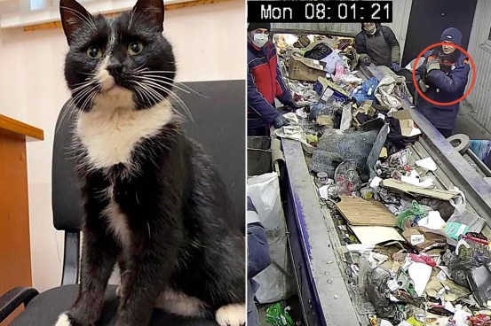 Cat narrowly escapes death at Russia's waste processing plant