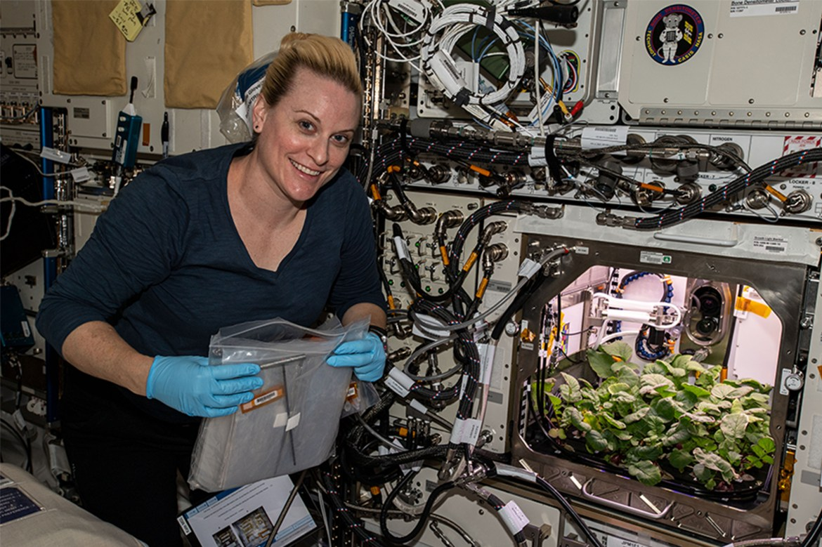 Astronauts grow radishes aboard the International Space Station 1