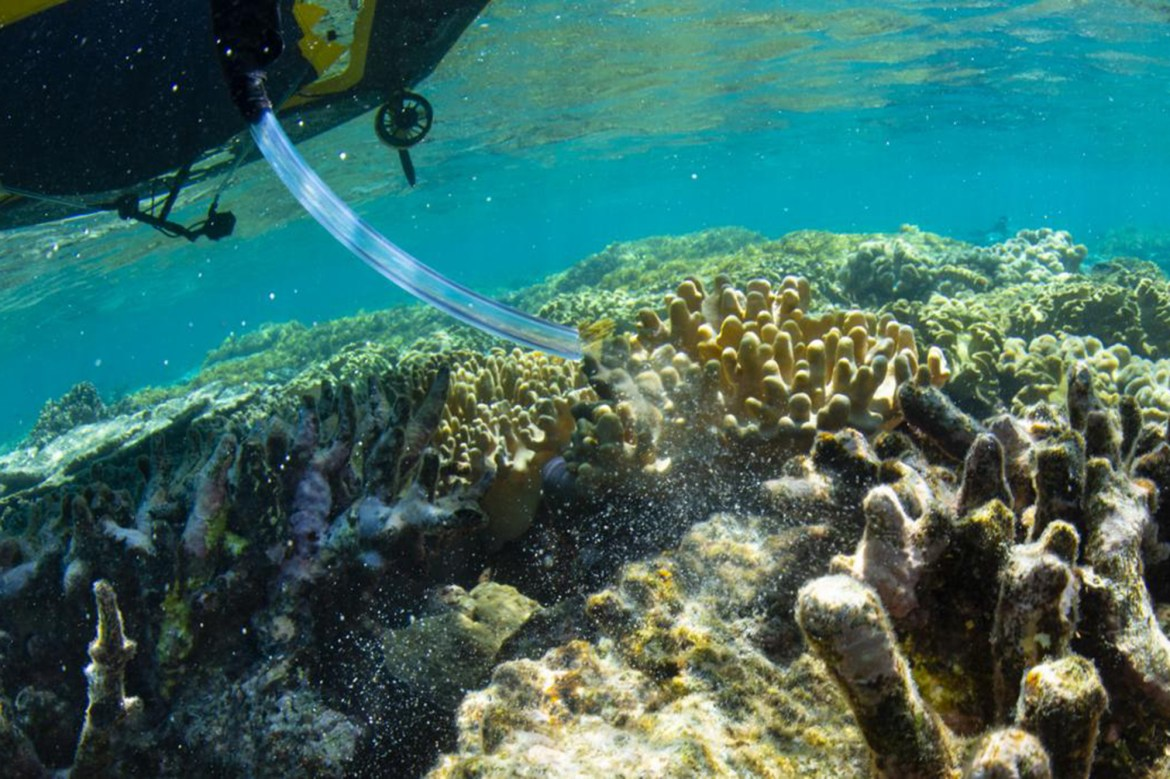 'Coral IVF' trial at Great Barrier Reef shows promise 1
