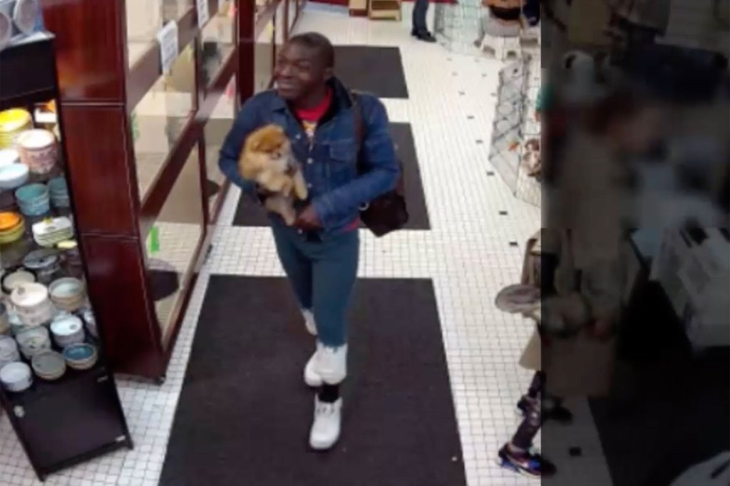 WATCH: Crook casually steals pricey Pomeranian puppy from NYC pet store