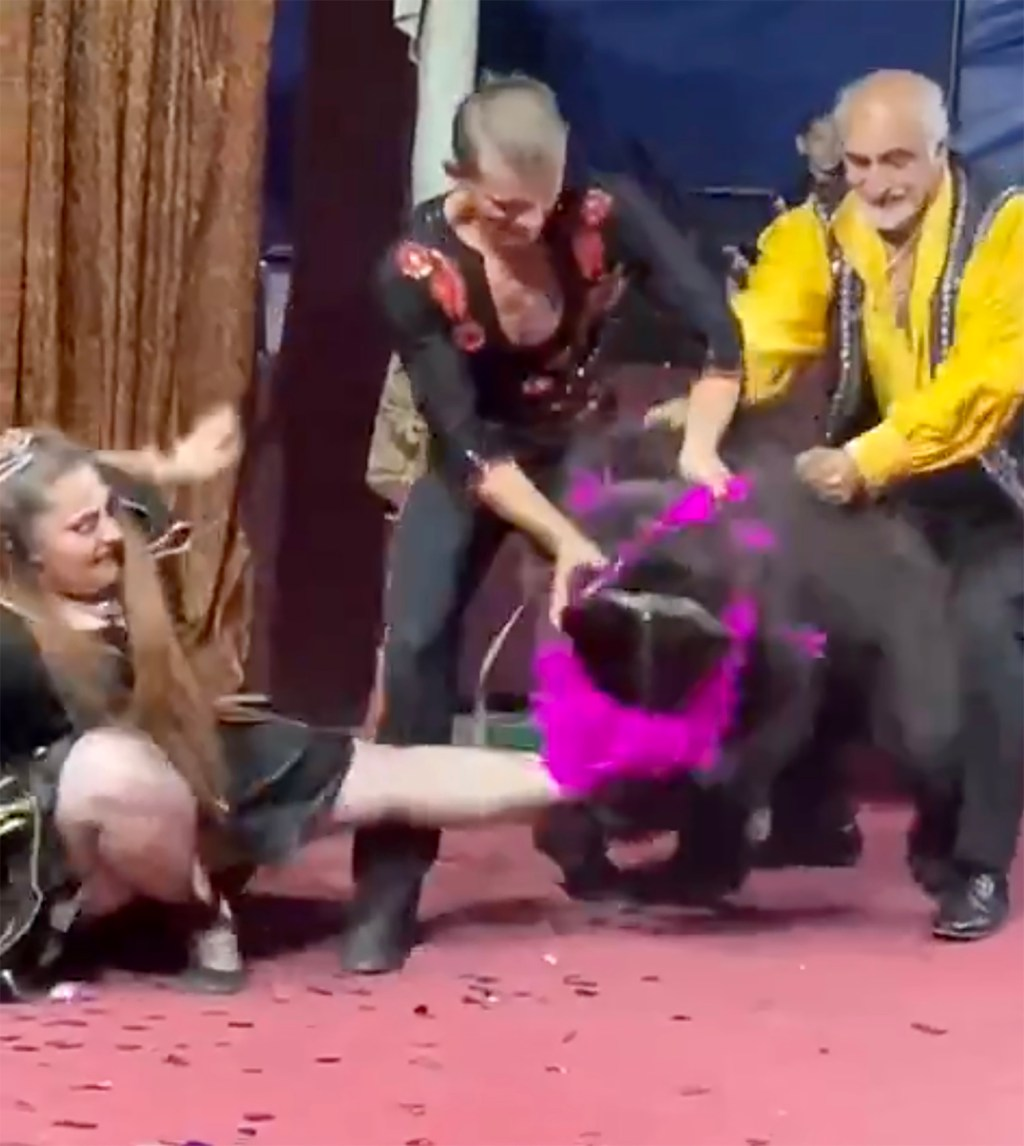 WATCH: Bear mauls circus trainer twice in front of horrified crowd, circus denies it