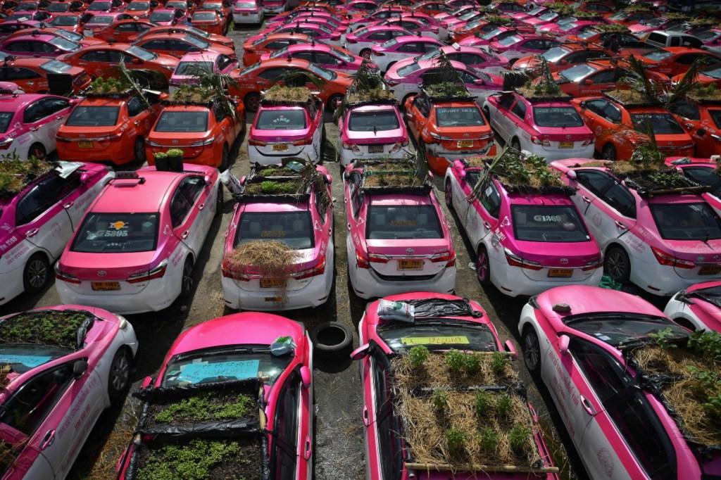 Miniaturegardensareseenon theroofofunusedtaxis at a taxi garage in Bangkok, Thailand, September 16, 2021.