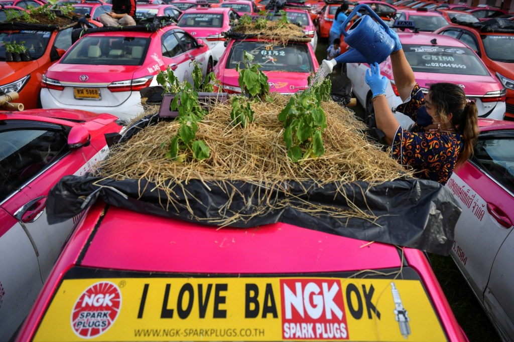 A worker sprinkles water on vegetables planted on the roof of unused taxis due to the business crisis caused by the coronavirus disease (COVID-19) pandemic at a taxi garage in Bangkok, Thailand, September 16, 2021.