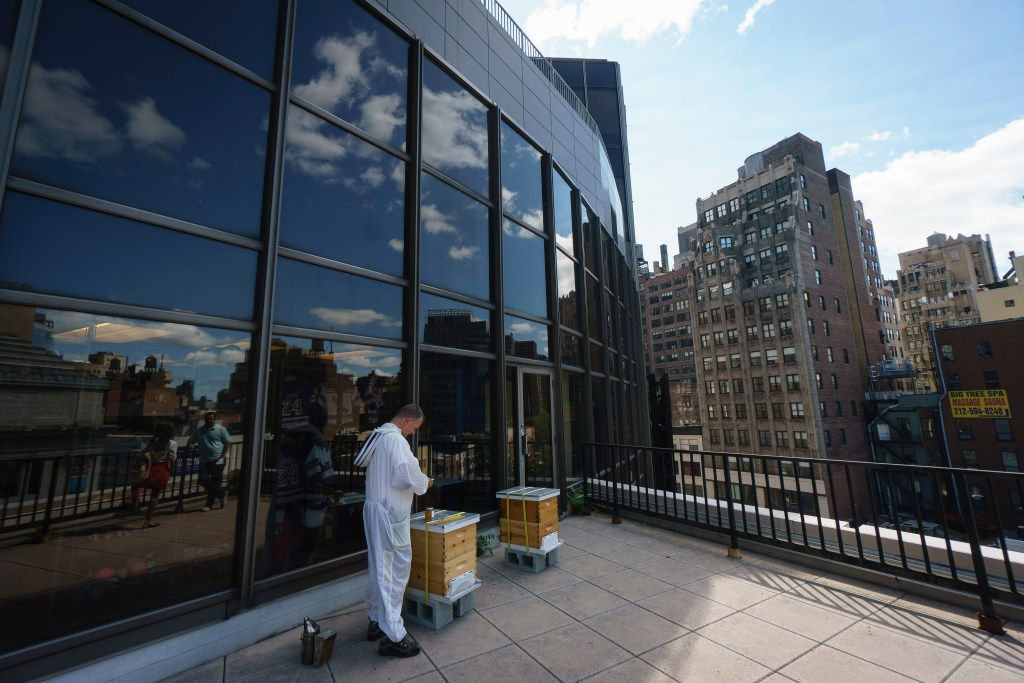 Whitburn, the beekeeper, shows off the bees' new home on MSG's little-known sixth floor roof deck.