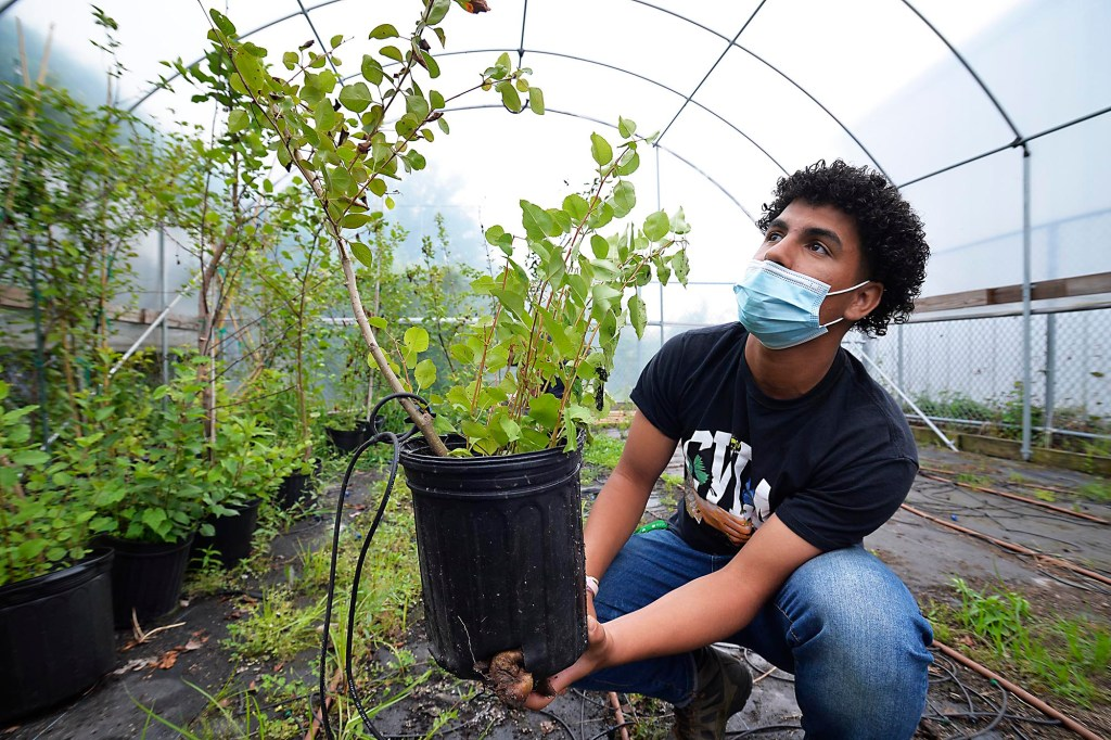 John Bowne High School senior Rubben Reyes with a Survivor Tree.