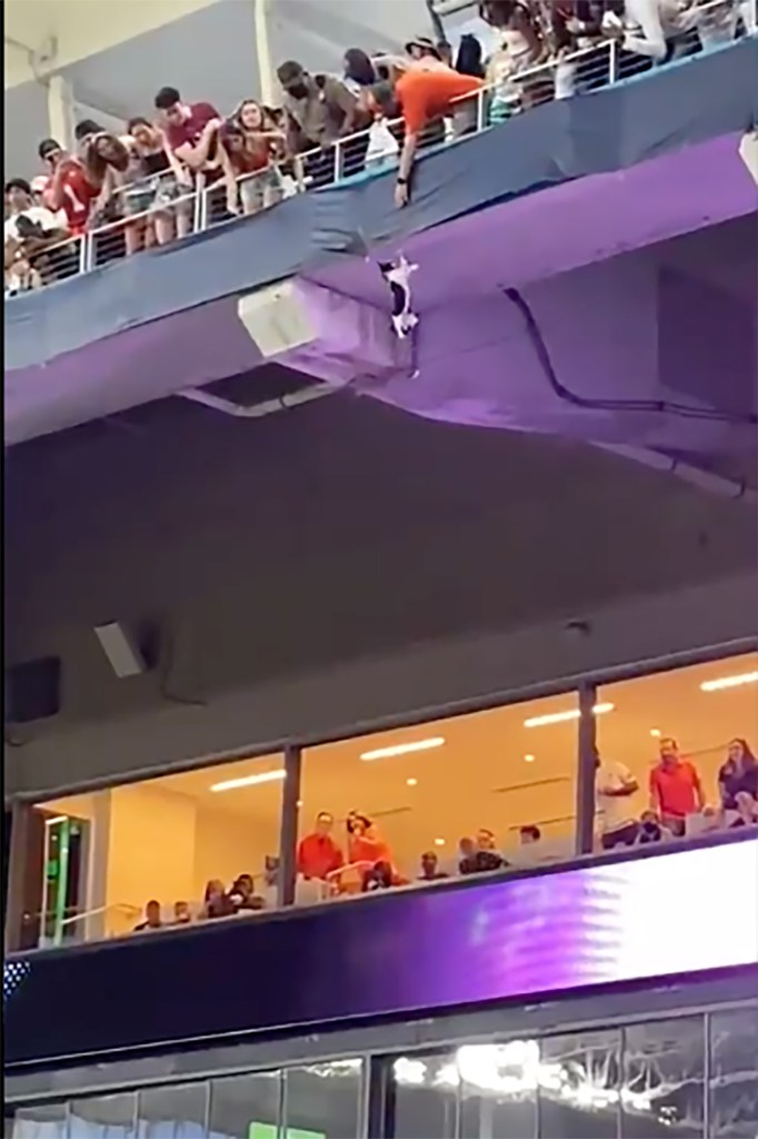 A stray cat dangles with its claws, hanging on to dear life in a dramatic scene during a college football game at Hard Rock Stadium.