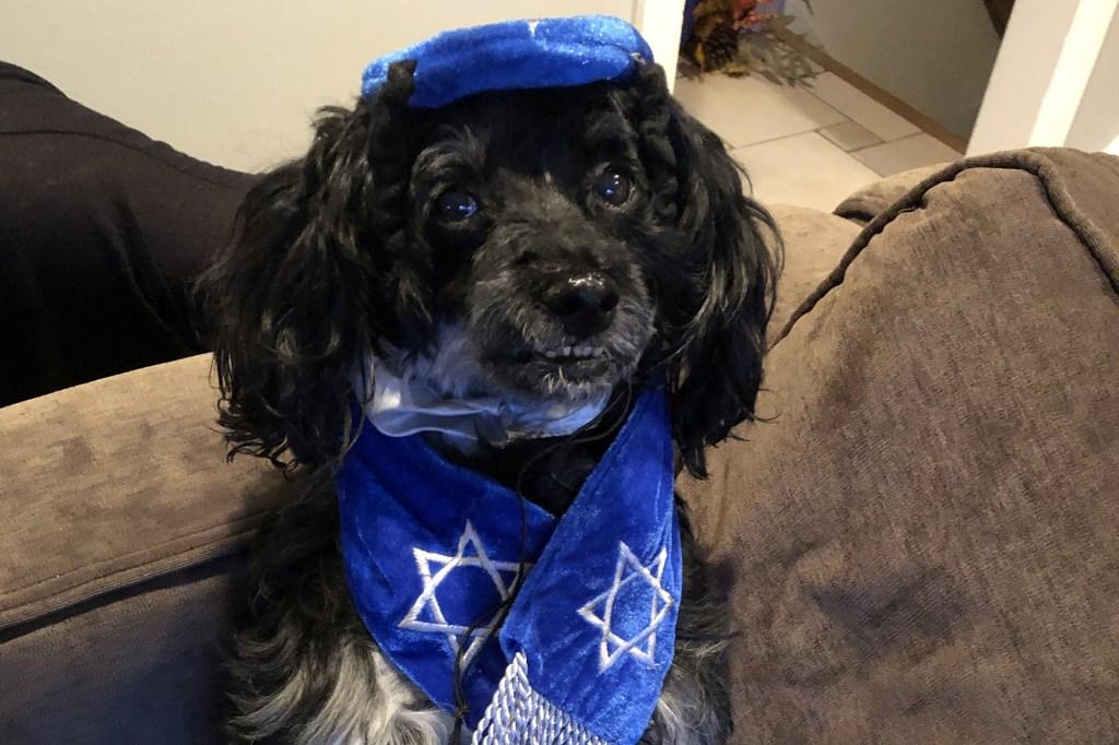 Rambo during his Bark Mitzvah.