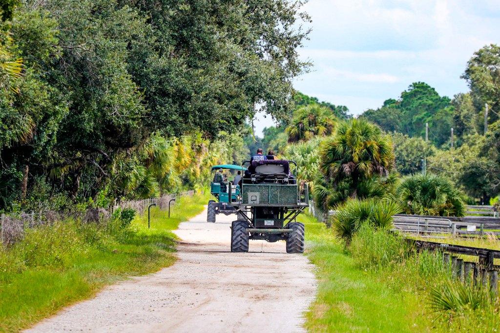 Law enforcement drive swamp buggies