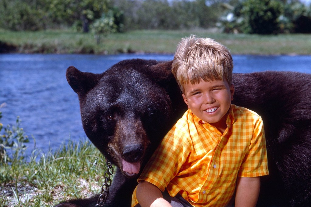 """Photo showing a very young Clint Howard and his bear co-star, Bruno, on the CBS series """"Gentle Ben,"""" which aired from 1967-69."""