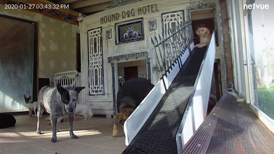 """The dogs can be seen playing outside the """"Hound dog hotel."""""""