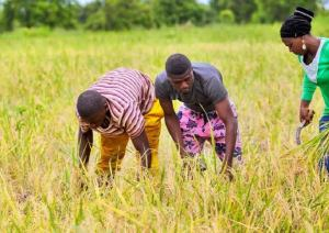 Agric Reality TV Show