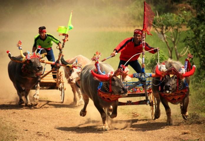 Olaharaga-Yang-Asli-Kebudayaan-Indonesia-2