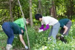 FORCES stewards Morgan Nivison (Le Moyne College) and Haixu Zhao (SUNY ESF) remove garlic mustard at Green Lakes State Park. Photo by FORCES Visual Media Steward Michael Gill (Cazenovia College).