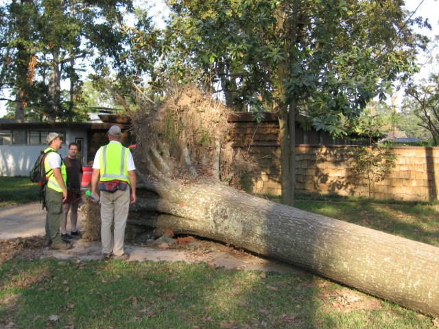 Team Specialists discuss tree loss (and near miss!) with homeowner after Hurricane Gustav. Because it impacted a public street, the tree was marked for FEMA removal and reimbursement.