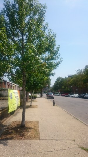 Successful street tree plantings. New tree boxes were cut at locations significantly set back from the curb to minimize damage caused by activity close to the street.