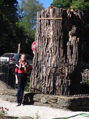 Balmville tree by Mary Kramarchyk