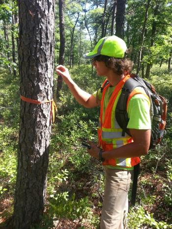 james-rittenhouse-inspecting-a-tree-during-a-ground-survey