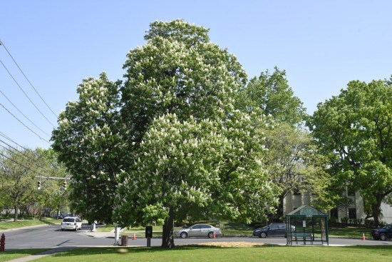 The urban forest of Syracuse has an estimated 1,583,000 trees, with an overall tree density of 99 trees per acre.