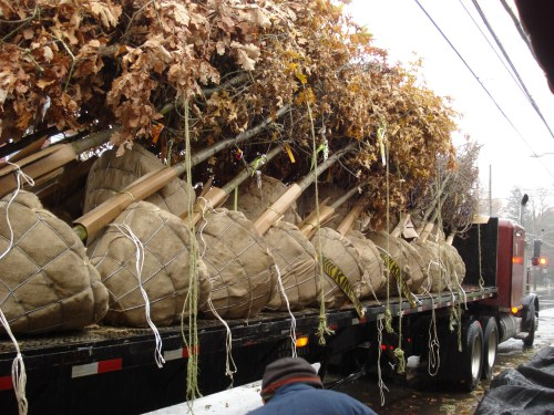 bb-trees-on-truck-matthew-stephens