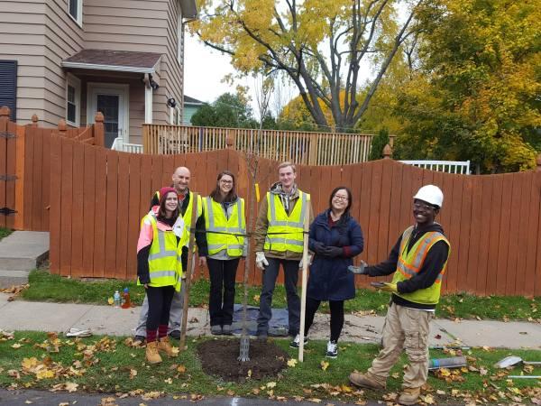 syracuse tree planting