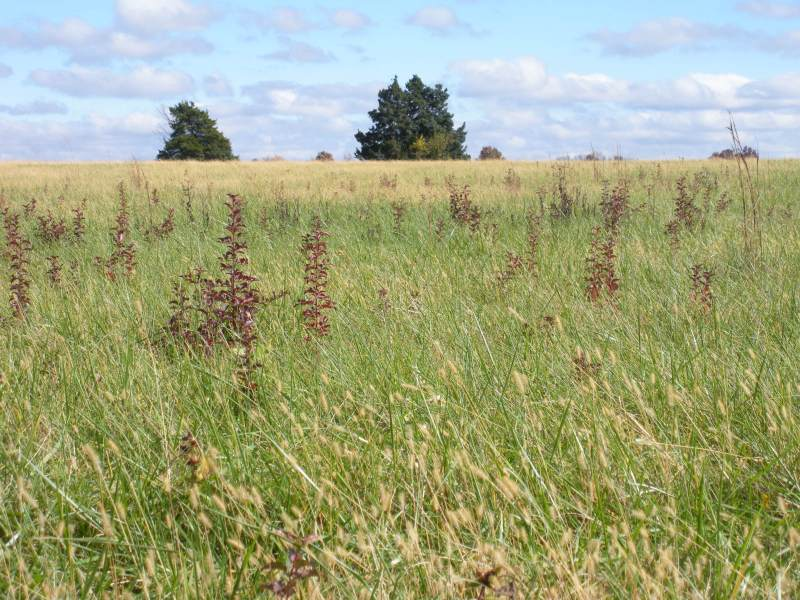 seedlings in pasture