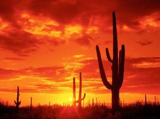 Burning Sunset, Saguaro National Park. Arizona