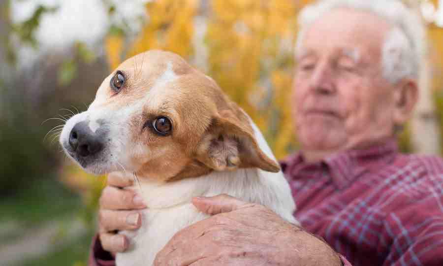 A legjobb kutyafajták idős embereknek