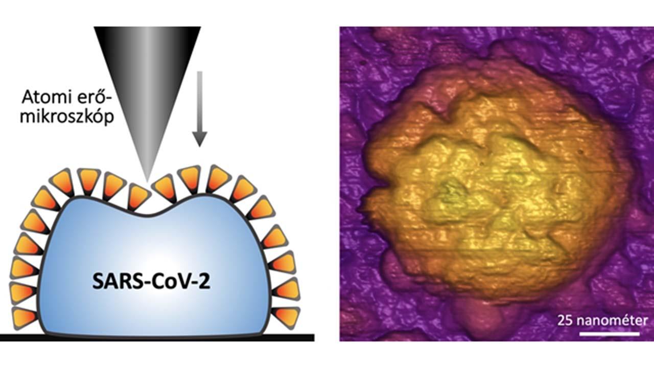 Magyar kutatók: Ezért lehet ennyire fertőző a koronavírus