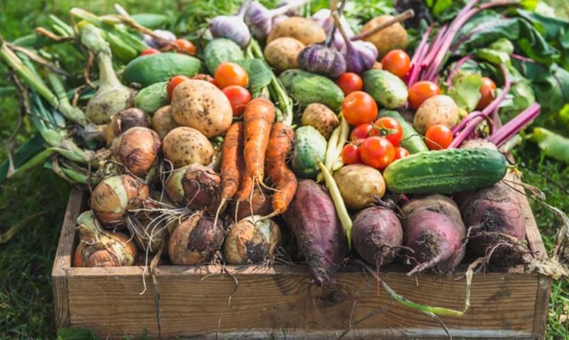 zöldség sárgarépa, petrezselyem