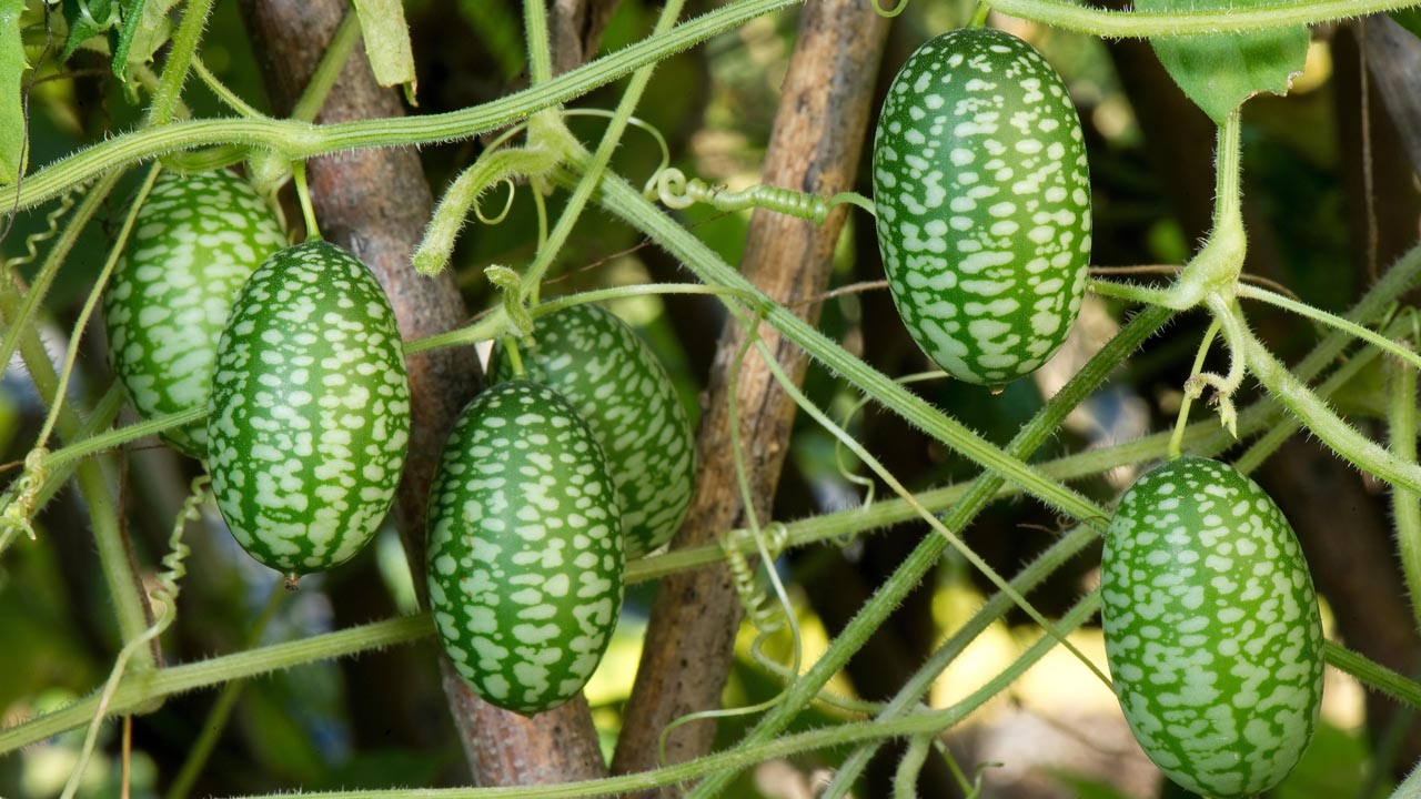 Új zöldségfélék termesztése