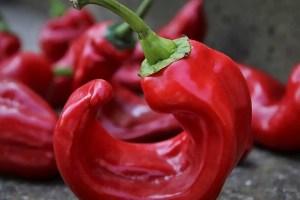 fűszerpaprika paprikás