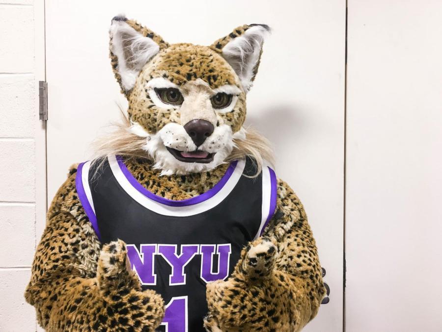 NYU's mascot, the Bobcat.