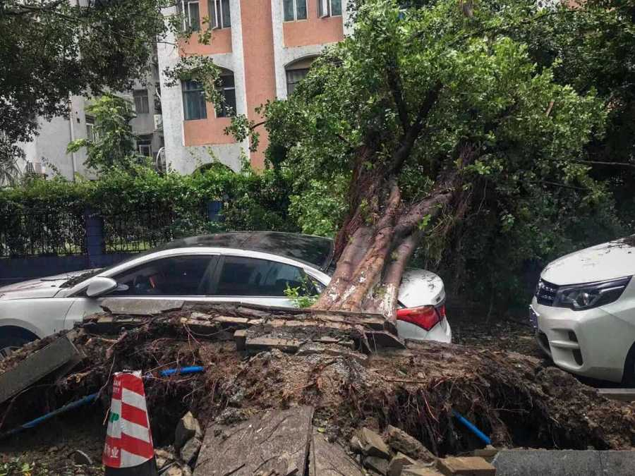 A trunk fell on a car in the city of Guangzhou.