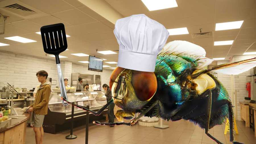 Palladium Dining Hall's head chef, Filipe Flynn, is a filth fly. He may be a fly, but he also has a wife and a children of maggots to take care of. (Staff Illustration by Min Ji Kim   Photo by Max Lerner)
