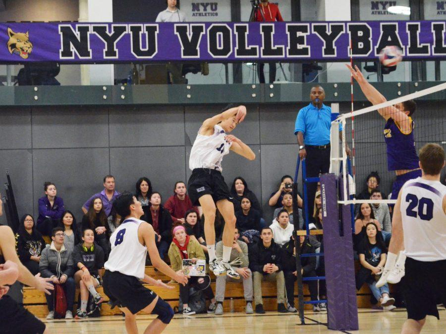 The NYU Men Volleyball team is off to a good start. They have stayed undefeated this new season. (Photo by Julia Moses)
